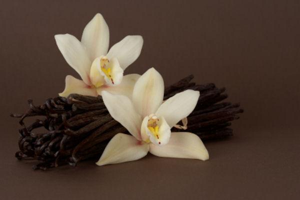 Цветы ванильные картинки 7
