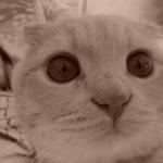 Котик Руся (по наводке Скромняжки) :)