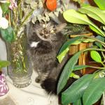 Мои коти,Туся и Муся.