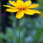 Люблю фоткать цветочки ;)