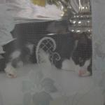 Мэдвэдик и чупакабра)теперь еще и тюлень)