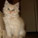 Мой персиковый зверь!!!
