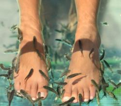 Пилинг рук и ног рыбками Гарра Руфа