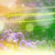 """Косметический сливки """"Розмарин"""", маска для лица """"Клеопатра"""" и гель для кожи вокруг глаз """"Петрушка"""" от НПФ """"Царство ароматов"""""""